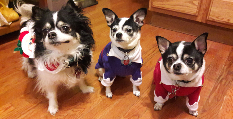 dogs-in-costumes-web.jpg